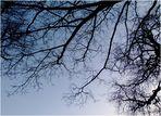 Graziles Geäst eines Winterbaumes