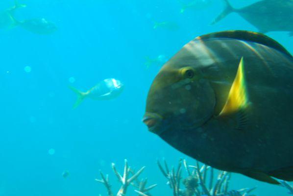 Great Barrier Reef, Australien, 2009
