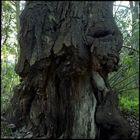 Great Tree (10)