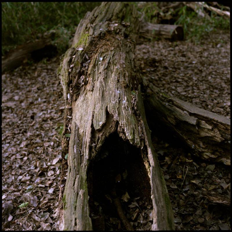 Great Tree (7)
