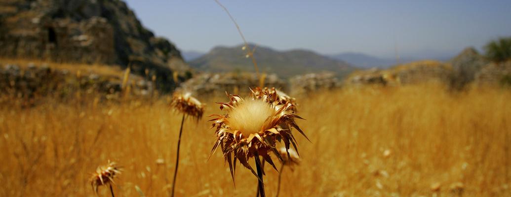 greek flower