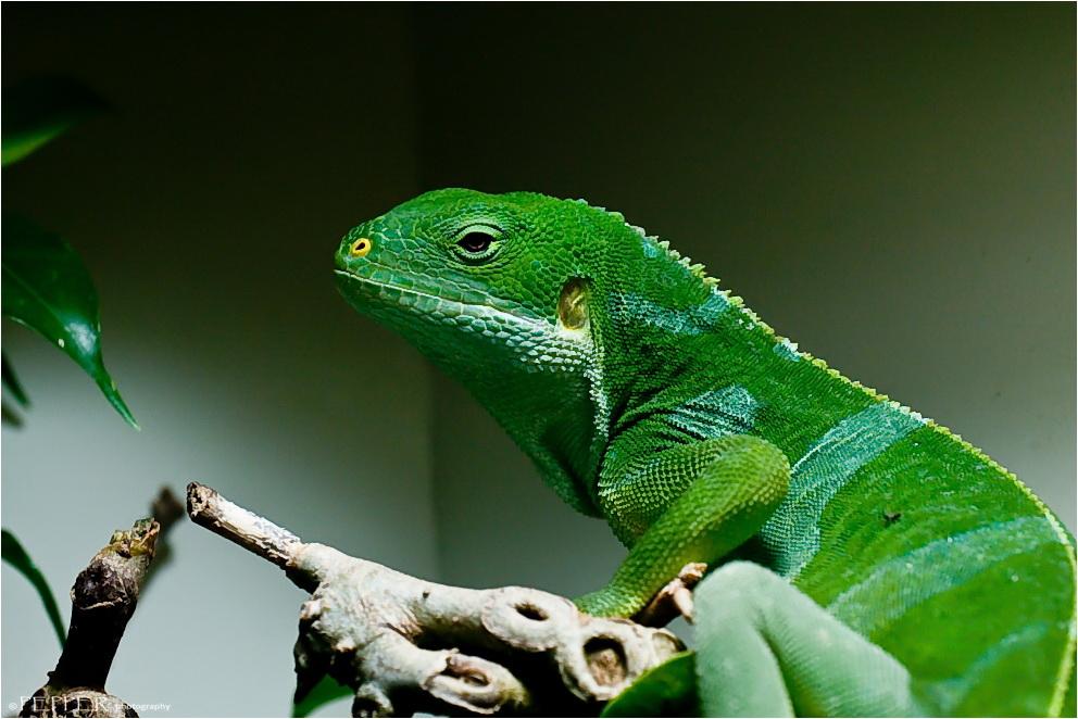 ~ Green ~