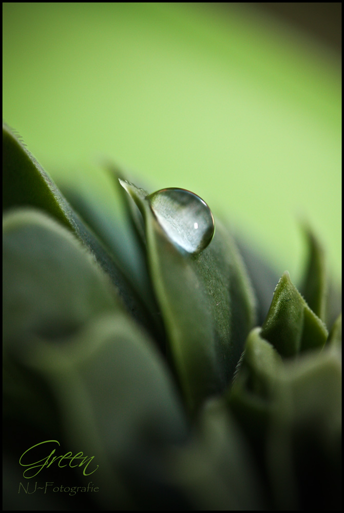 [green....]