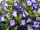 green, blue and white flowers