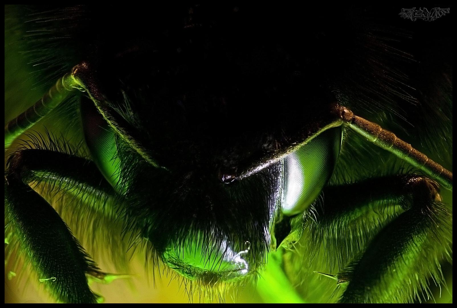 Green Bumblebee