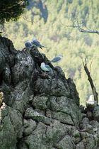 Green Canyon Türkei
