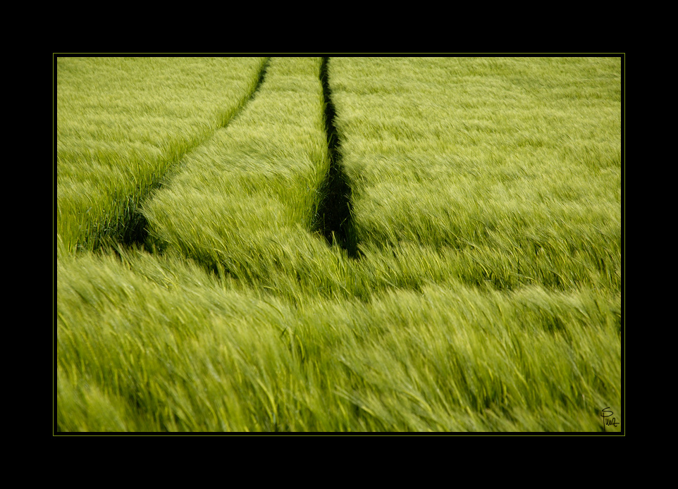 ___green___