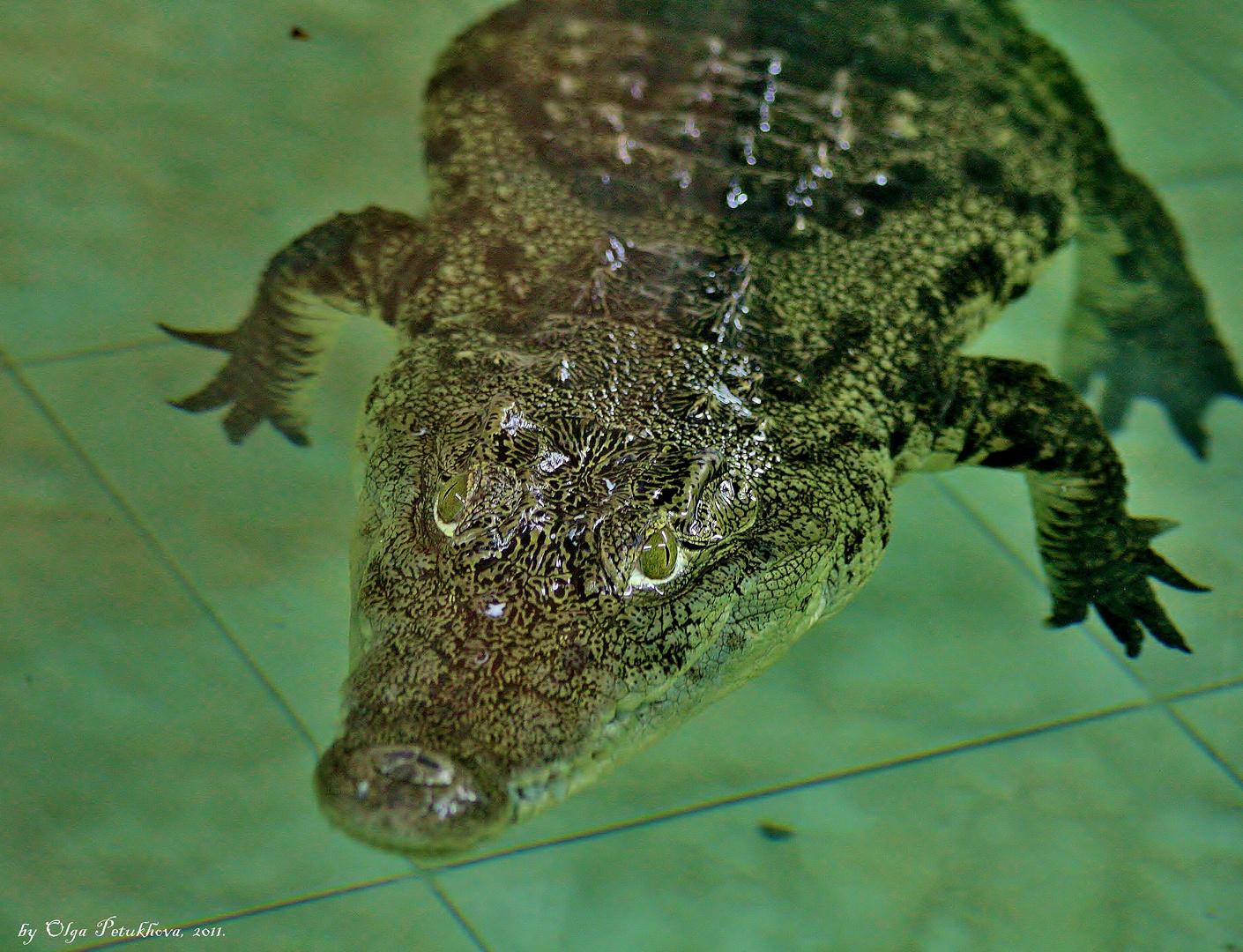 Green Eyed Fellow ·