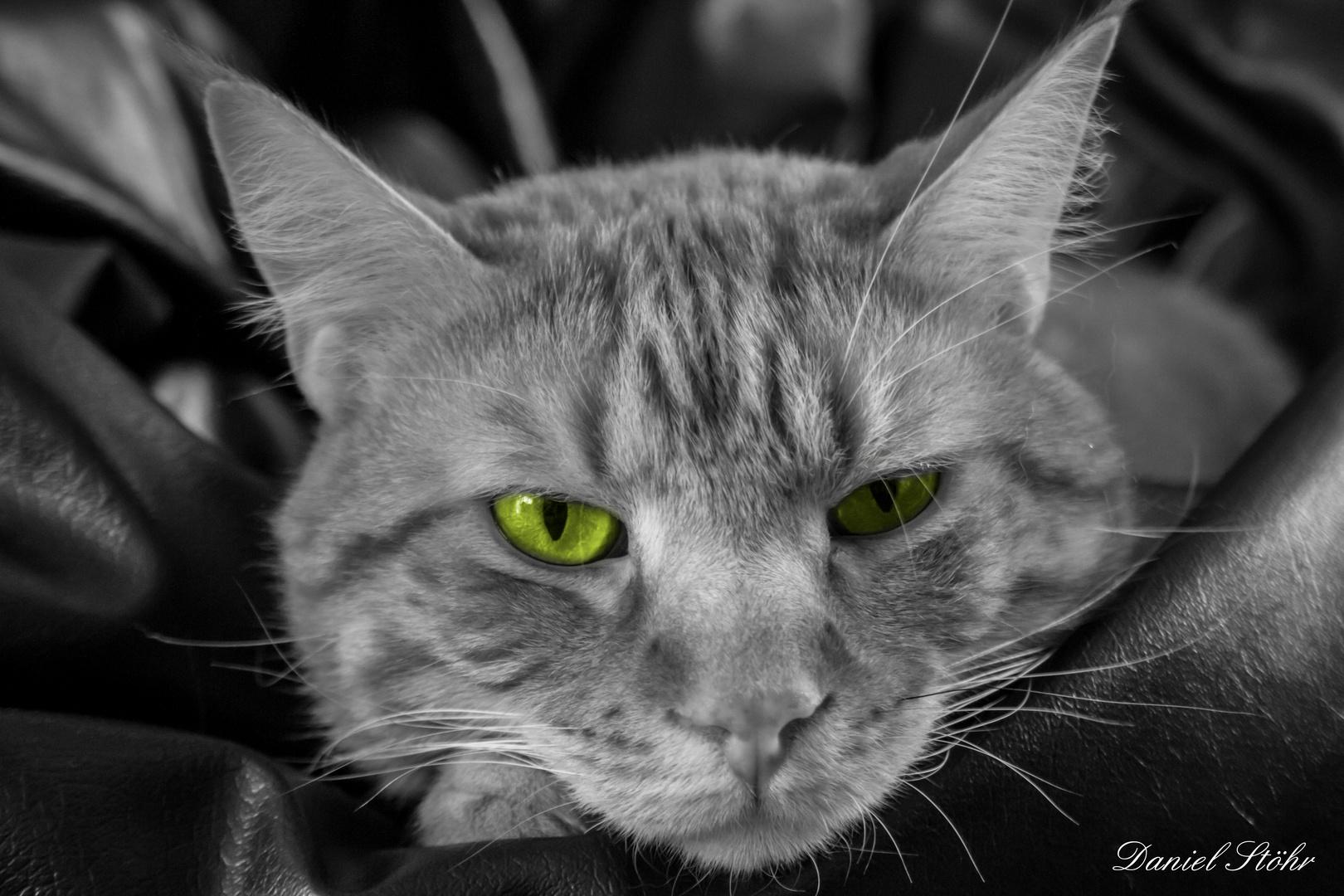 green Eyes II