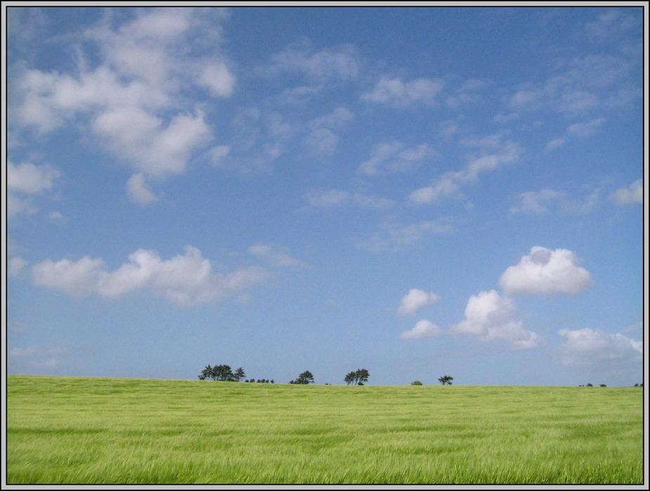 green fields III