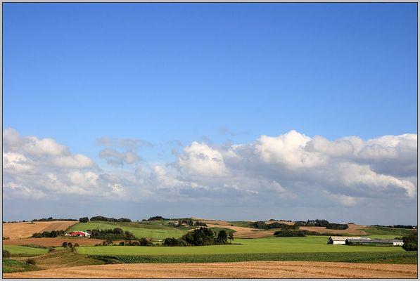 green fields IV