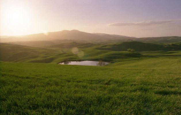 Green fields of...