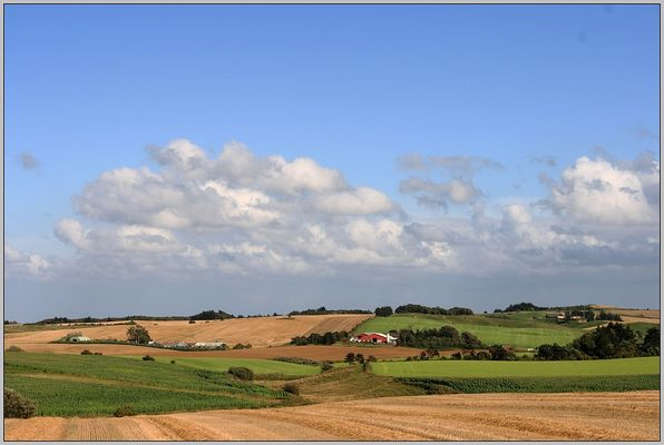 green fields V