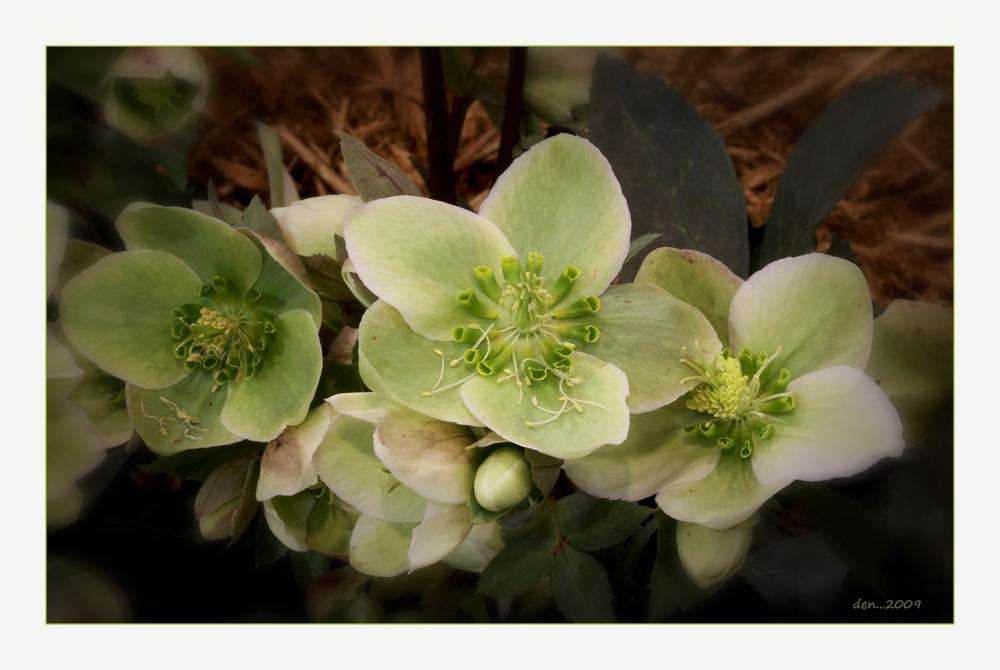 Green Flowers.....