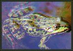 green frog [3D anaglyphs]