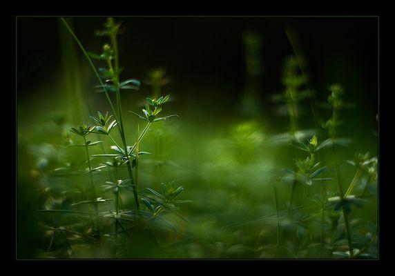 """""""Green Grass"""""""