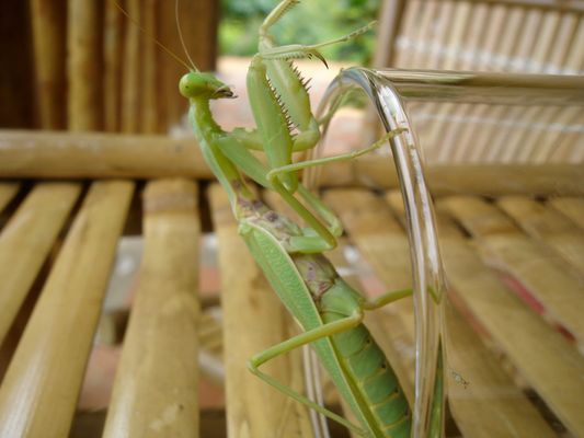 Green Grasshopper Cocktail