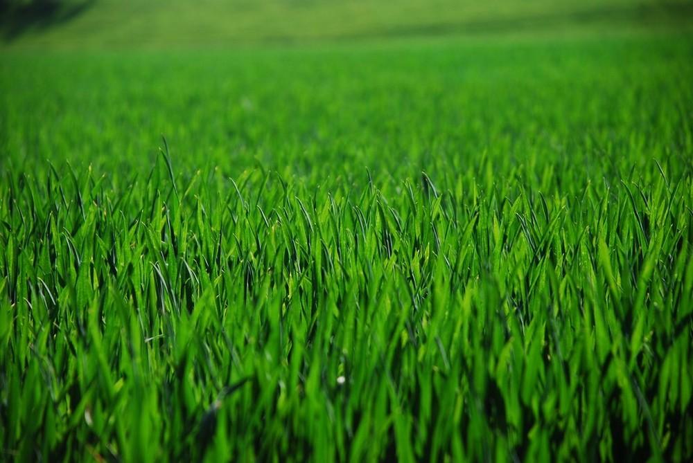 Green Green Gras of Home