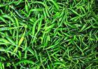 Green Hot