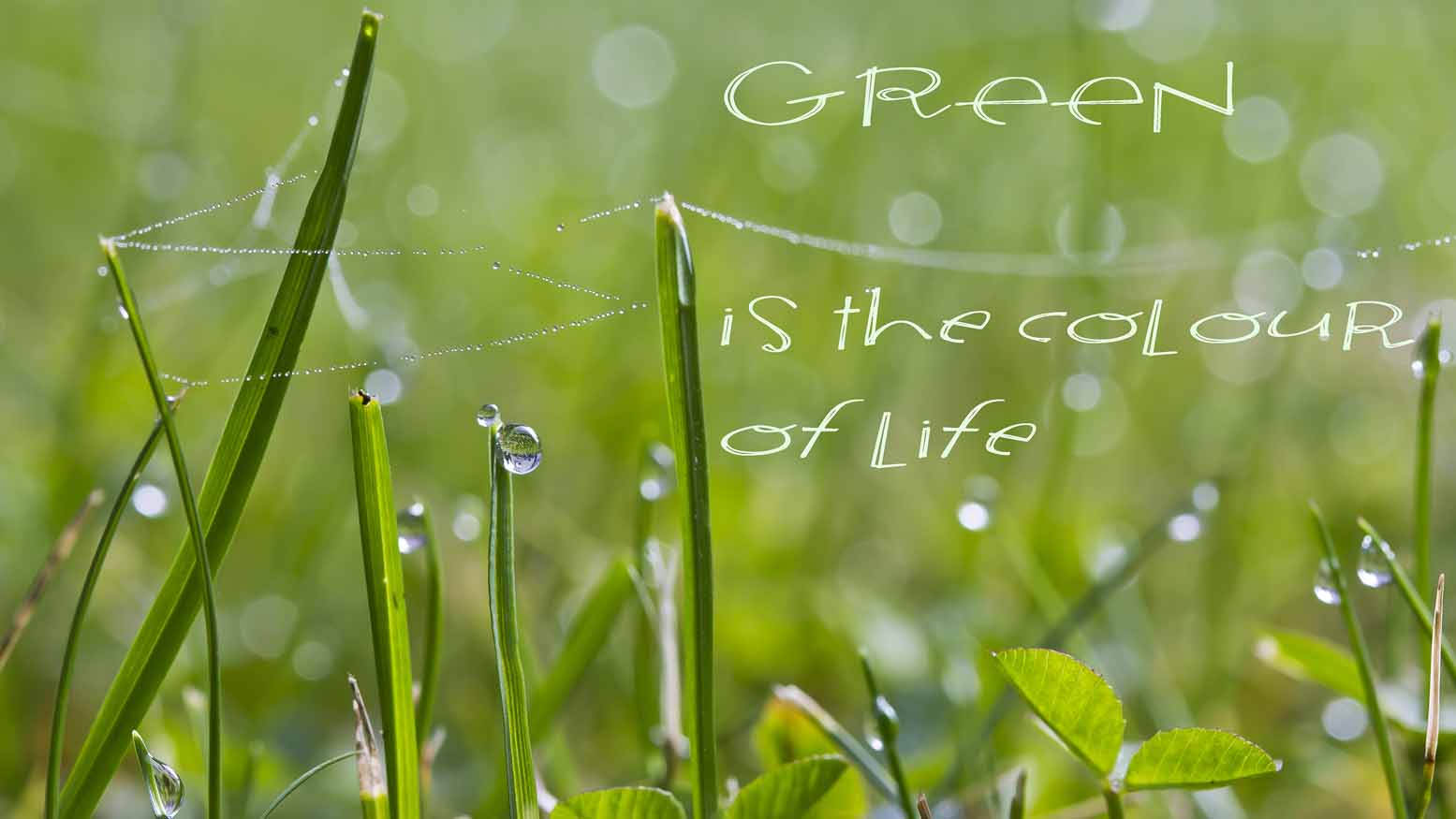 Green is the colour of life