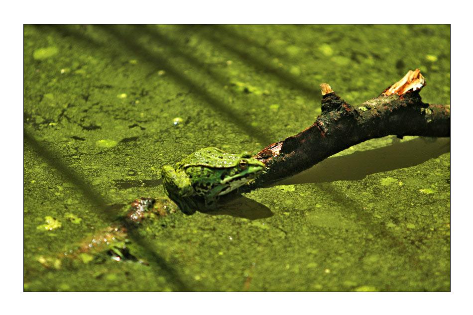 Green life...
