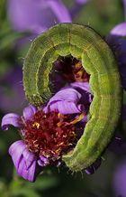 green monster...