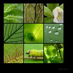 . green nature .