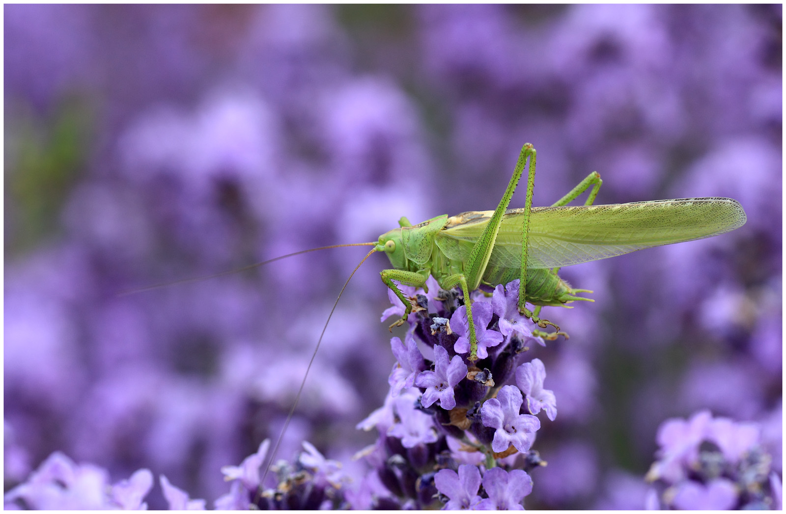 green on purple