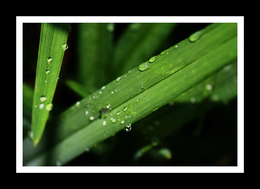 green razor