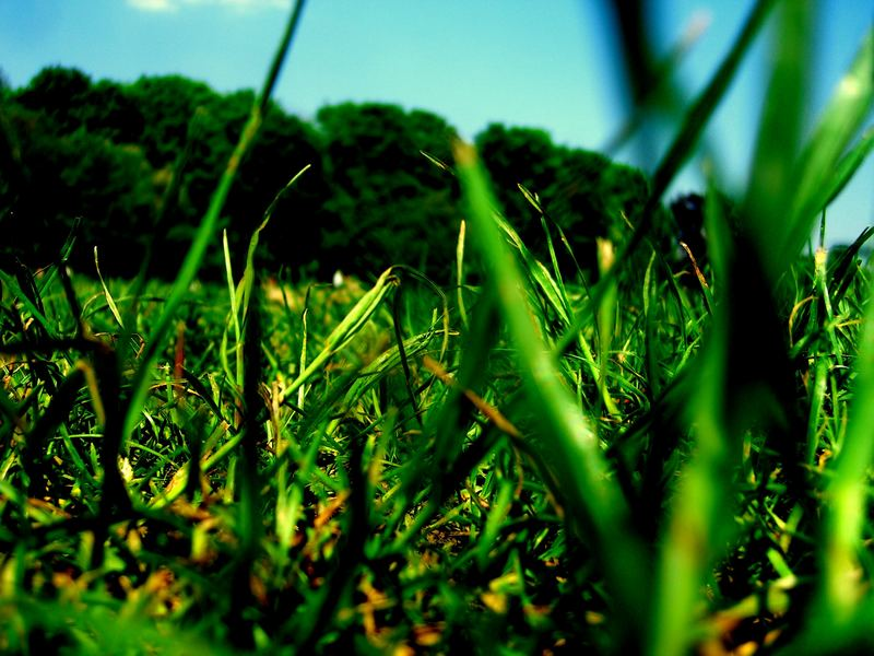green spring in munich