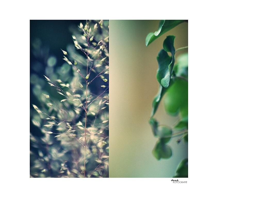 .green stuff.