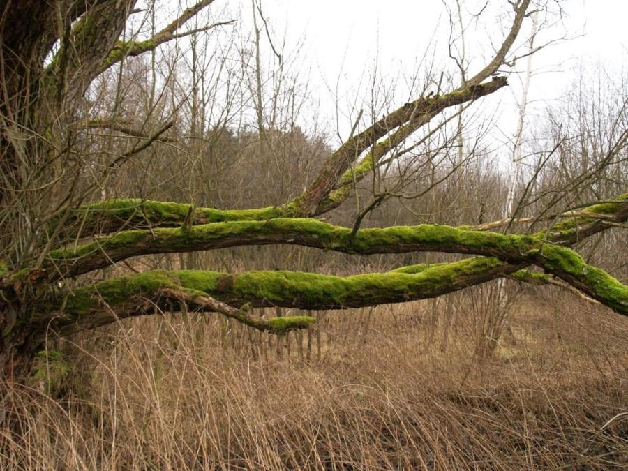 Green tree. Is it new kind?