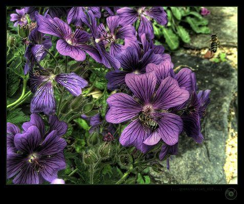 green-violet