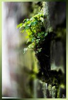 .green wall