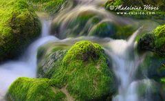 Green Waters