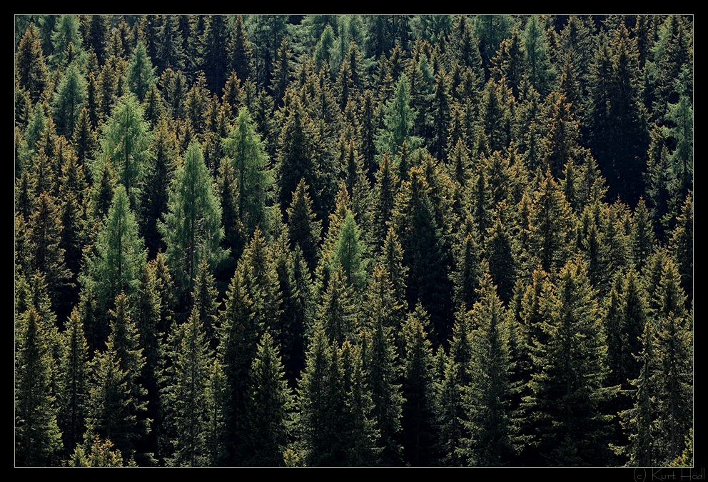 Green Woods..