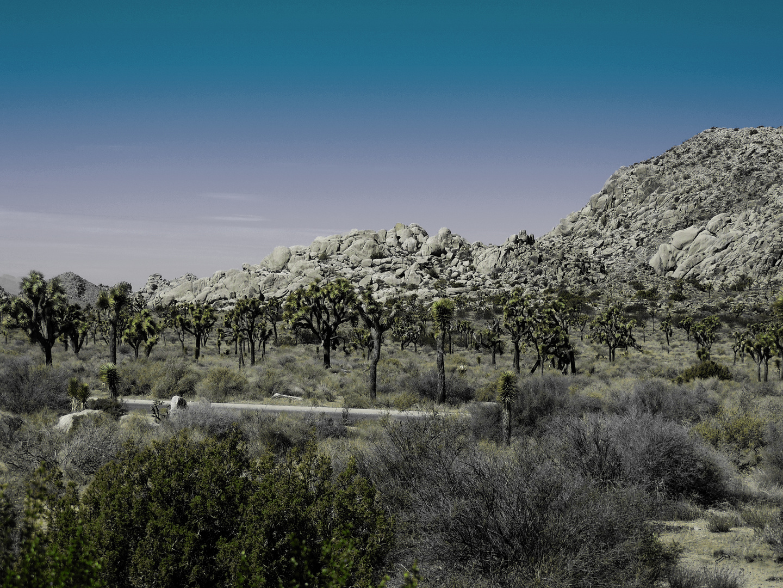 Green Yoshua Trees