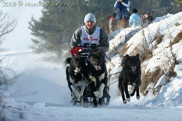 Greenland dogs team 2