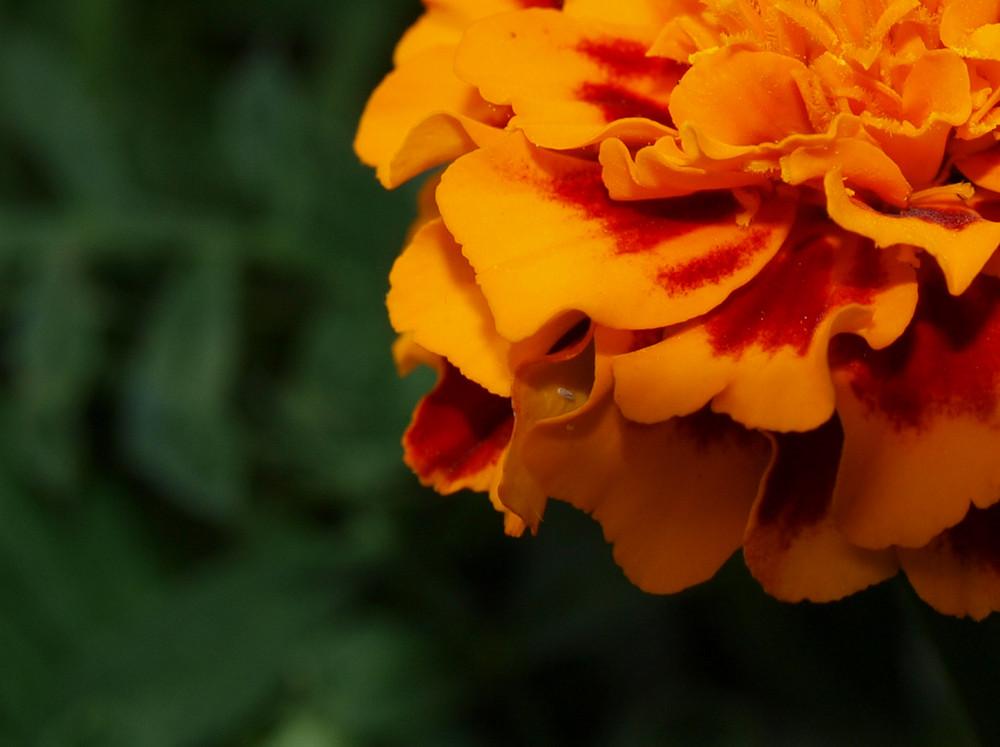green.orange