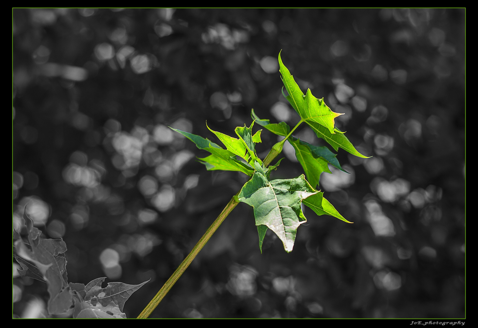 green_stuff