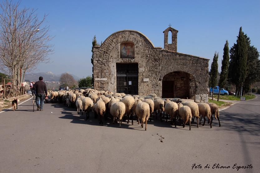 Gregge di pecore.....