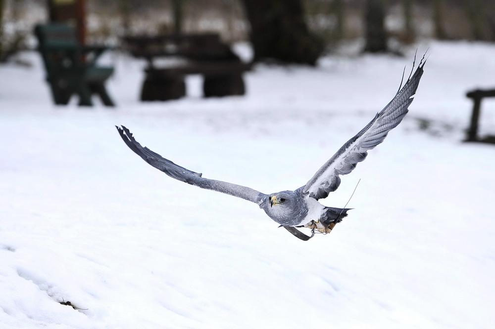 Greifvögel 2