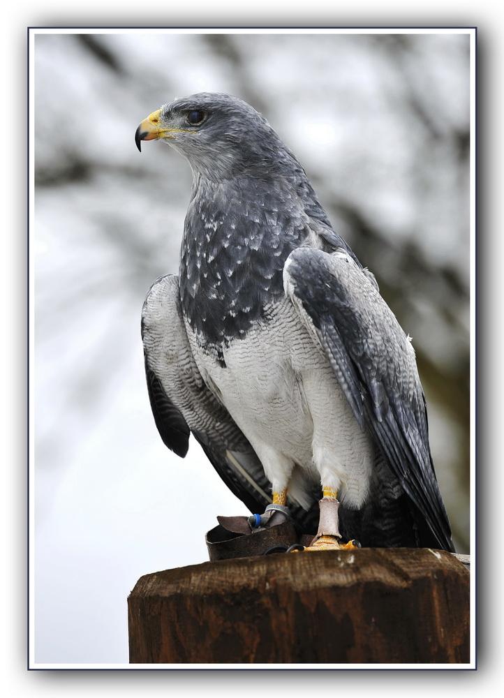 Greifvögel 3