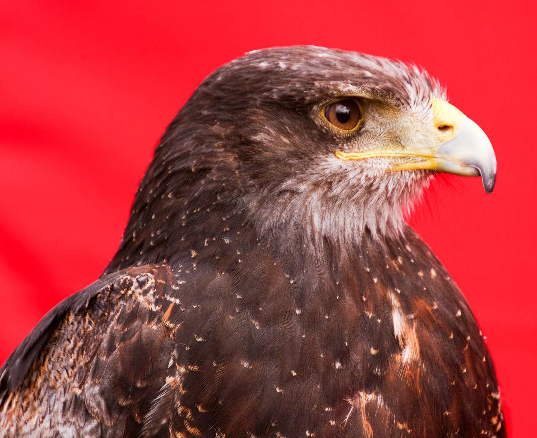 Greifvogelschau auf Photokina 2014 12
