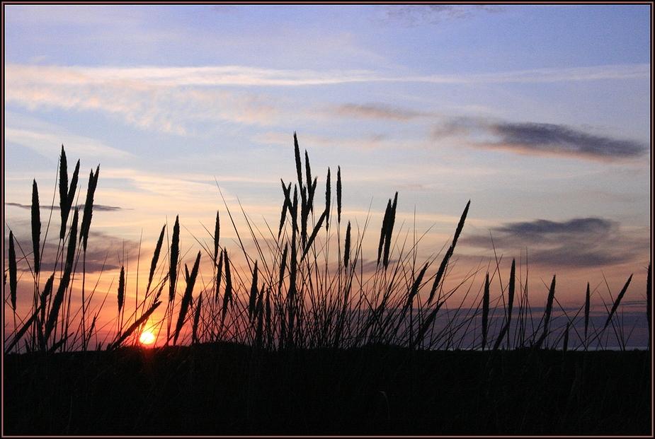Grenen solnedgang