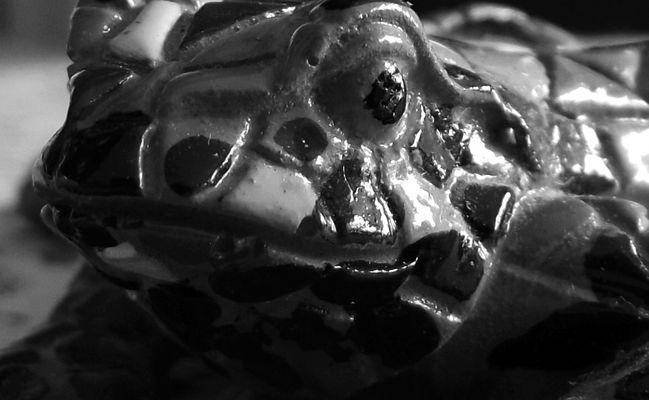 Grenouille de mosaique