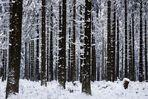 """""""Grenzen-loser Winter 1"""""""