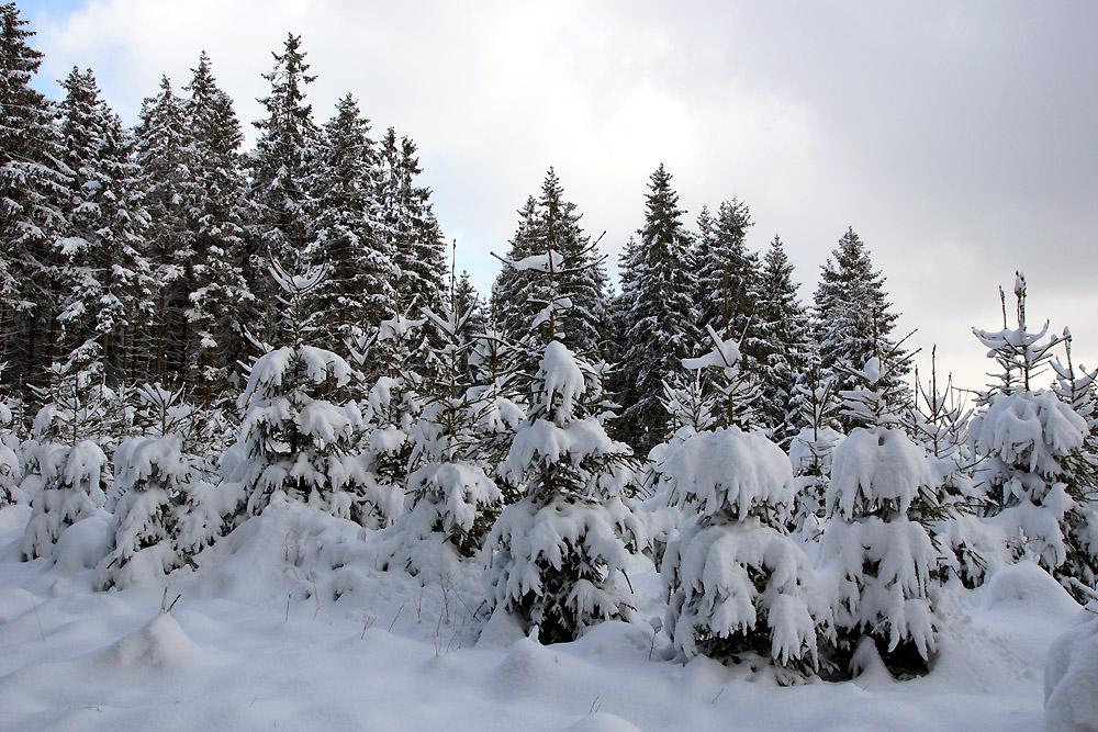 """""""Grenzen-loser Winter 2"""""""