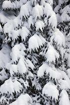 """""""Grenzen-loser Winter 4"""""""