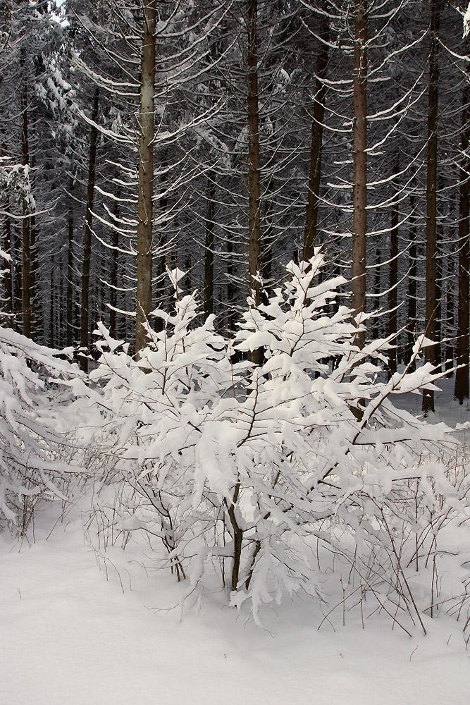 """""""Grenzen-loser Winter 6"""""""